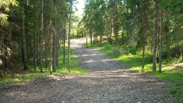 Тропы здоровья в Таллине