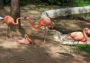 Дом фламинго в Рижском зоопарке