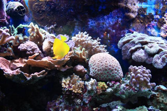 Морской музей-аквариум в Смильтине