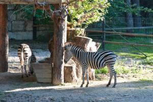 Познавательные программы в Рижском зоопарке